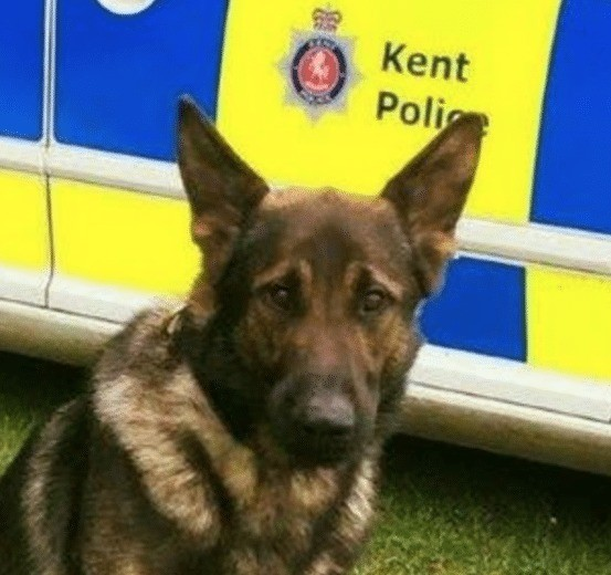 Helicopter And Police Dog Called In After Suspicious Activity In Maidstone