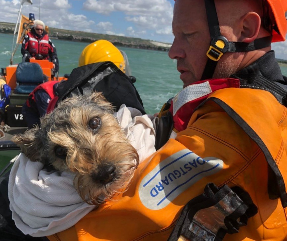dog rescued after becoming stranded on an island in the middle of portsmouth harbour 1