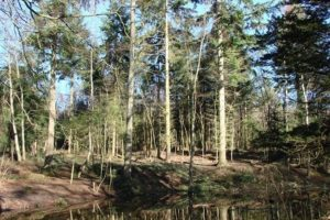 probe-launched-after-exposing-himself-in-hargate-woods-in-tunbridge-wells
