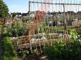yobs trash and steal from gosport allotments